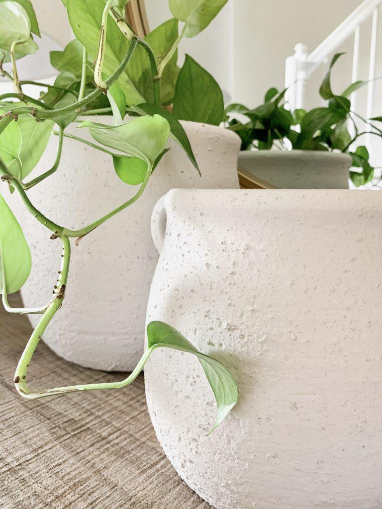 Studio McGee concrete pots on table