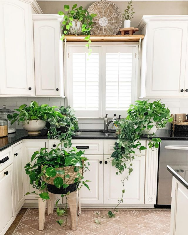 Happy water Wednesday! 💦 My little plants are in line to get some TLC! I shared in my Stories which plants I recommend for beginners. I started with 1 a couple of years ago and now the obsession is real. Head over to my Stories to check it out!   #modernfarmhouse #farmhousestyle #interior123 #bhghome #antiquefarmhouse #homedecor #shiplap #farmhouseinspired #farmhousedecor #magnoliahome #neutraldecor #americanfarmhousestyle #prettylittleinteriors #fixerupper #countrylivingmagazine #mydecorvibe #currentdesignsituation #betterhomesandgardens #ltkhome #moody_tones
